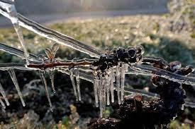 """Nuit de gel """"catastrophique"""" pour les arboriculteurs de la vallée du Rhône"""